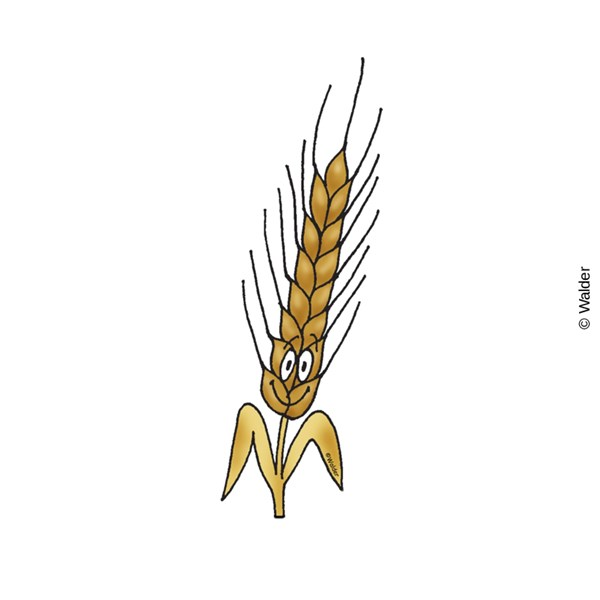 Cartooned Shivas Haminim: Wheat