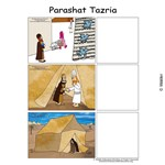 Parshas Tazria Sequencing in  English